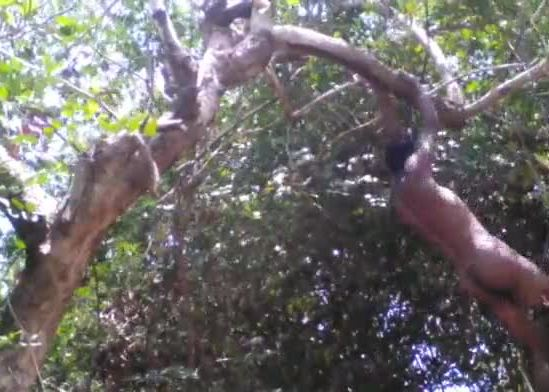 Village boy nude safar in forest play with tree's